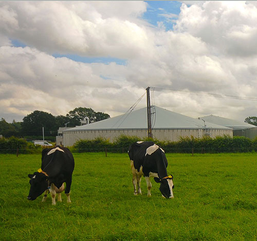 Progetti di biogas da biomasse agricole
